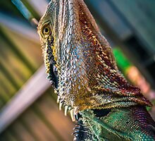 Water Dragon HDR by Monosquid