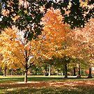 Subtle Autumn by Artophobe