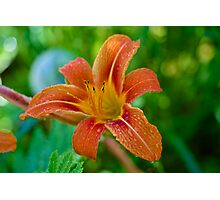 Lily Water Drops Photographic Print
