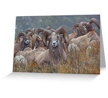 Resting Rams Greeting Card
