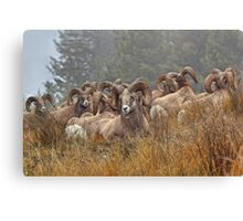 Ram Club Canvas Print