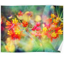 Autumn Flowers Poster