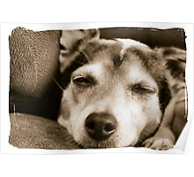 Dog Tired Poster