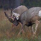 Deer Fight (4) by JamesA1