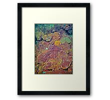 COMPETITION CORAL Framed Print