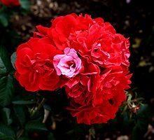 Beauty and fragrance a perfect match by brenda forsey