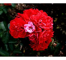 Beauty and fragrance a perfect match Photographic Print