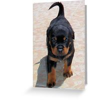 Cute Rottweiler Puppy Walking Towards The Camera Greeting Card