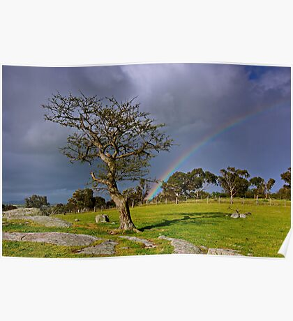 """A Rainbow And The Tree"" Poster"