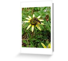 Hoverfly Feeding Greeting Card