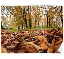 Autumn Park Poster