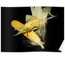 Fresh Corn on the Cob Poster