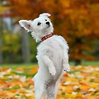 Pup standing up by Katho Menden