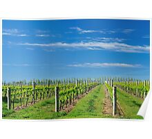 vineyard in the spring #2 Poster