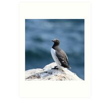 Common Guillemot standing Art Print
