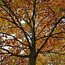 Only a few green leaves left by Arie Koene
