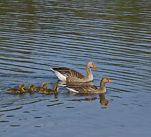 Greylag Family by Sue Robinson