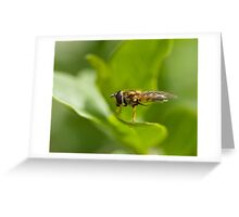 Hoverfly grooming Greeting Card