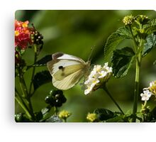 Large White Butterfly Canvas Print