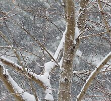 Snowy Branches by Karin Pinkham