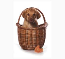 Funny brown puppy retriever Baby Tee