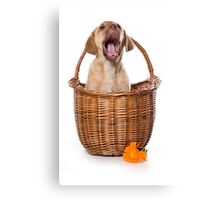 Funny brown puppy retriever Canvas Print