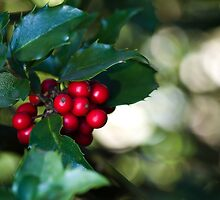 Holly Berries by Tom Gotzy