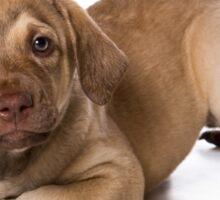Funny brown puppy retriever Sticker