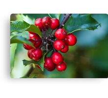 Holly Berries 2 Canvas Print
