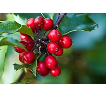 Holly Berries 2 Photographic Print