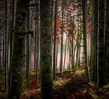 Oh That Light ~ Fall Colors ~ by Charles & Patricia   Harkins ~ Picture Oregon