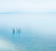 Lake Neuchatel by Angelika  Vogel