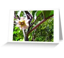 Blossom of a Flower  Greeting Card