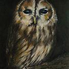 Tawny owl by Lynn Hughes
