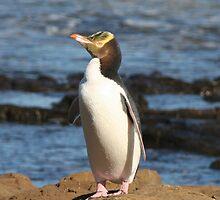 Yellow-eyed Penguin by Nicola Barnard