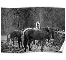Gloucestershire Horses Poster