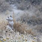 Frosty Fox by Arla M. Ruggles