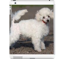 White fluffy puppy poodle charming dog iPad Case/Skin
