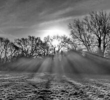 Shafts of Misty Light  . B/W by relayer51