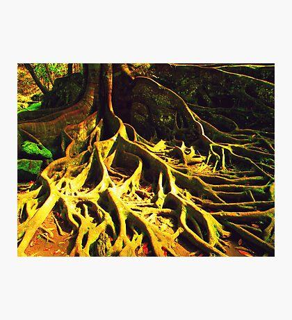 bali roots Photographic Print