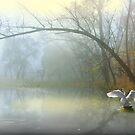 Conjuring Pond by Igor Zenin