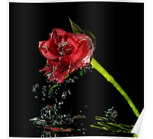 Watery rose Poster