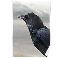Posing Raven Poster