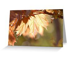 Maple Glow Greeting Card