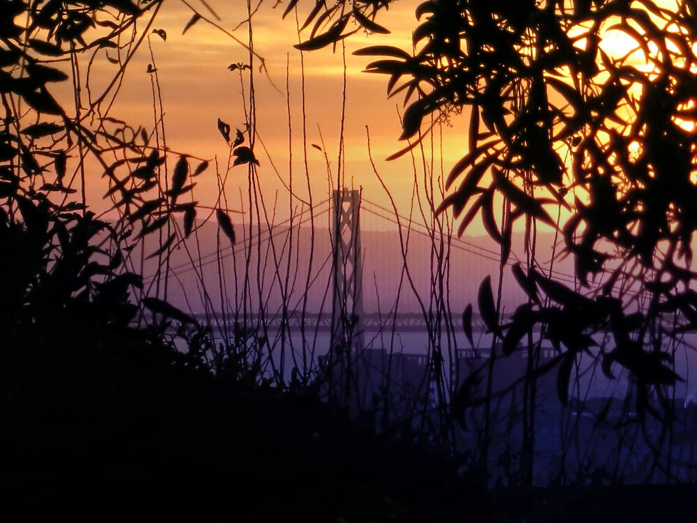 San Francisco Morning Glow by David Denny