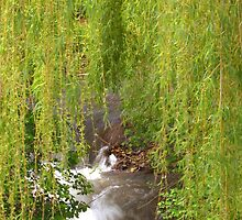 Glimpse through the Willows by Kathi Arnell
