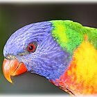 Rainbow Lorikeet by janewiebenga