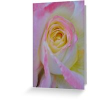 Beautiful Pink Rose Closeup  Greeting Card