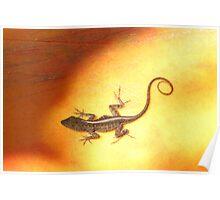 Sun Lizard Poster