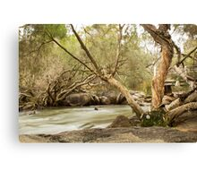 John Forest National Park  Canvas Print